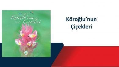 Photo of Köroğlu'nun Çiçekleri